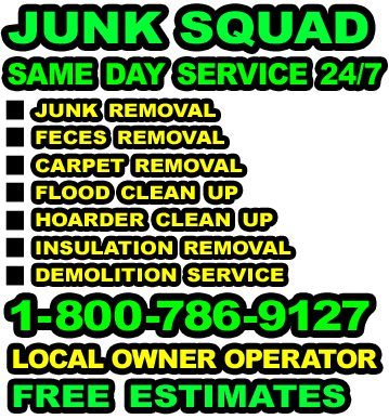Chicago Rodent Feces Clean Up, Chicago Mouse Cleanup Service
